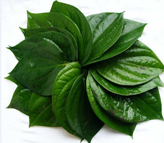 Manfaat daun sirih untuk kesehatan dan kecantikan
