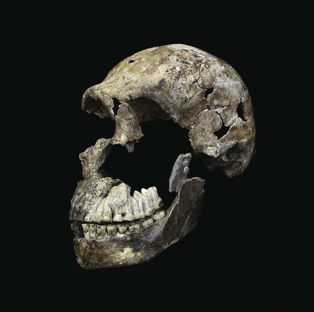 Homo naledi's surprisingly young age opens up more questions on where we come from