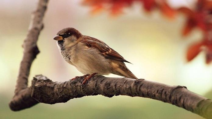 I tre consigli dell'uccellino - anonimo