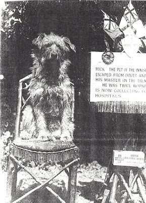 Mick the dog sat on chair with poster describing his antics