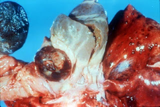 Patologi Sistemik pada Hewan