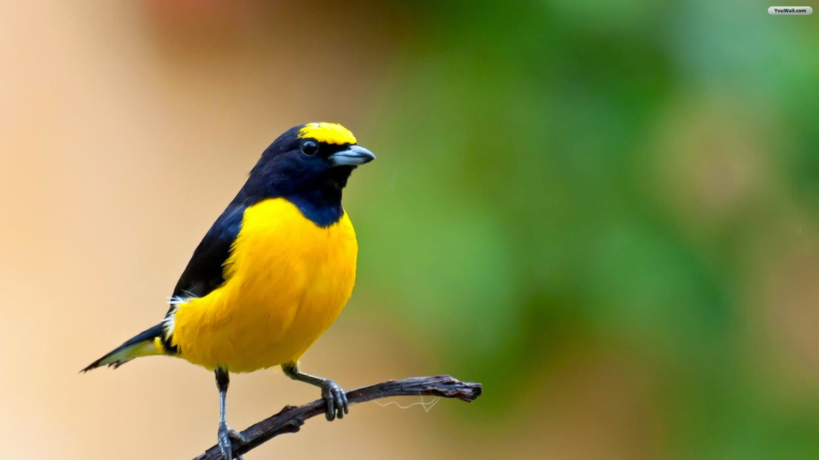 Different color birds 39 s hd wallpapers photos 2014 top 3 - Hd birds images download ...