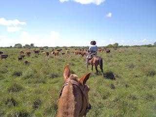 Argentiina, riitta reissaa, karjanajo, working ranch