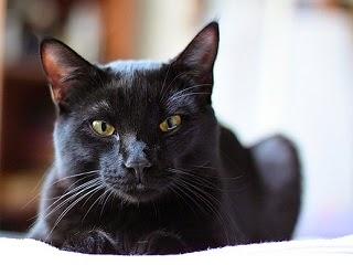 Unduh 97+  Gambar Kucing Hitam Lucu Lucu Gratis