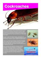 Pest Control Albion Park - Cockroaches