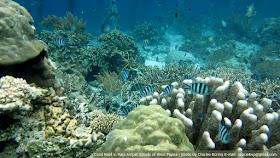 Coral reef environment in Raja Ampat of West Papua