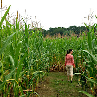 New England Fall Events_Wojcik Farms Corn Maze