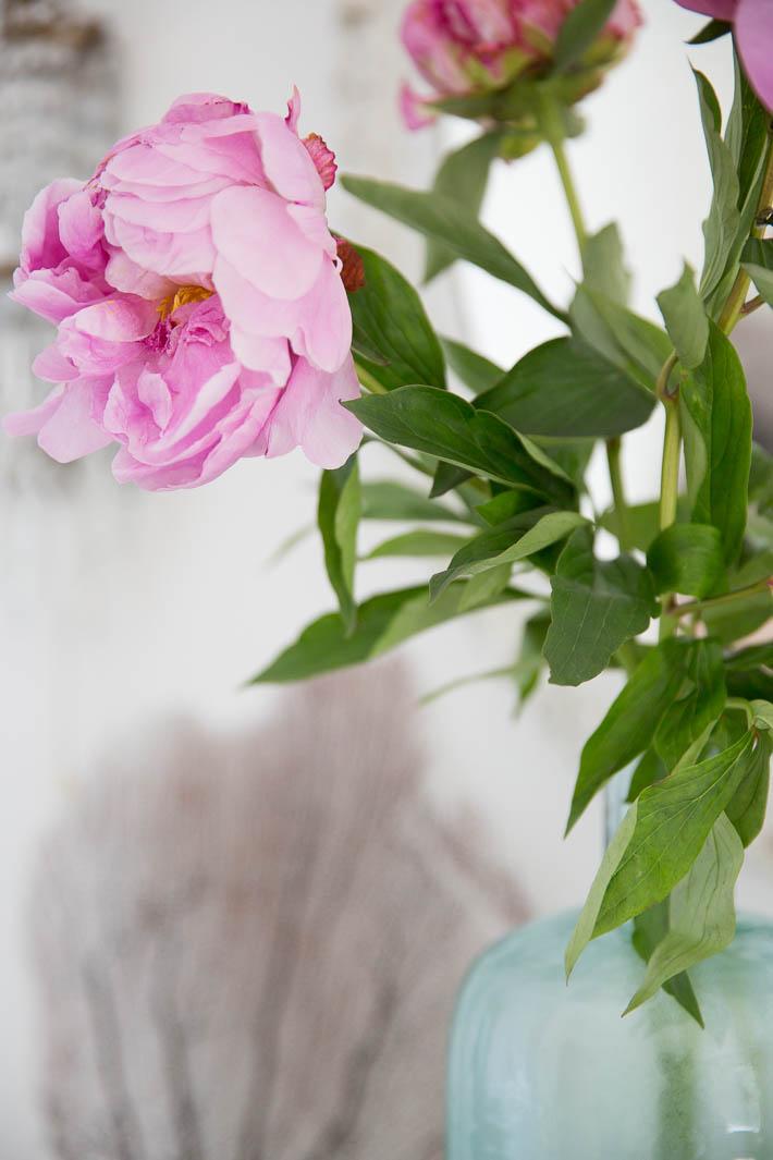 pink peonies with aqua