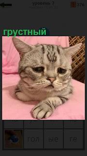 На розовой поверхности простыни лежит грустный котенок