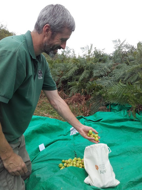 Devon Wildlife Trust's Andrew  Warren with part of the crab apple harvest from the charity's Dunsford nature  reserve - Photo copyright DWT (All rights Reserved)