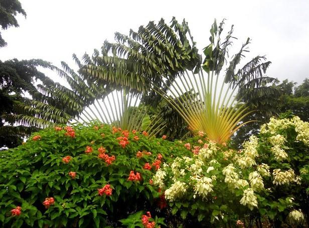 Petits paradis jardin botanique de deshaies guadeloupe for Jardin botanique guadeloupe