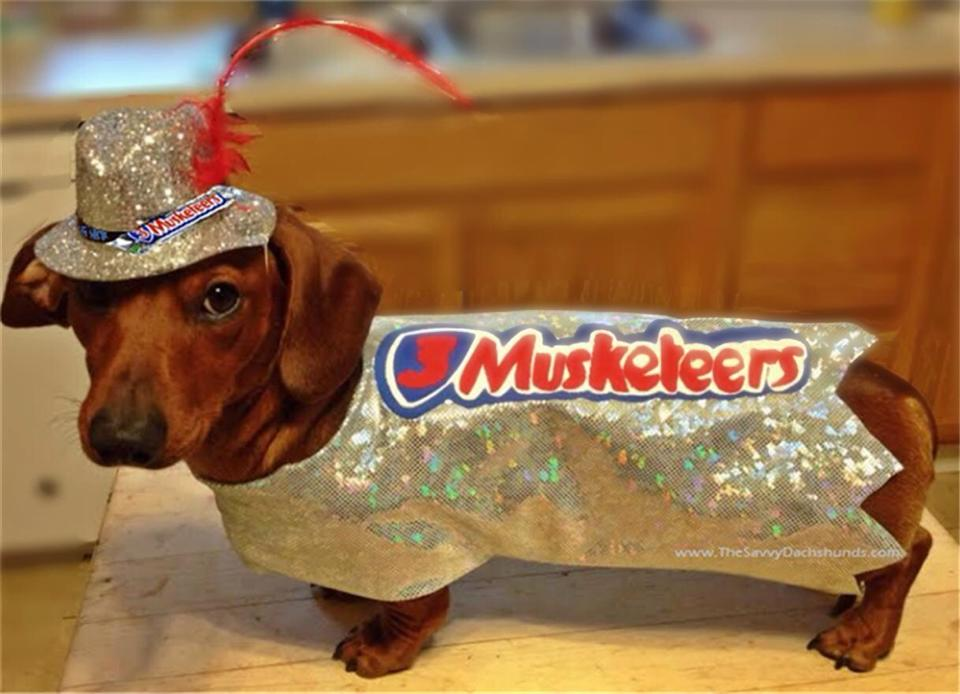 Donu0027t you just love Halloween? The costumes! Do you dress up your dog up in a costume? If so this contest is for you! From Oct 23 to Oct 312015 we are ... & A Savvy Dog Halloween Costume Contest! You need not be a dachshund ...