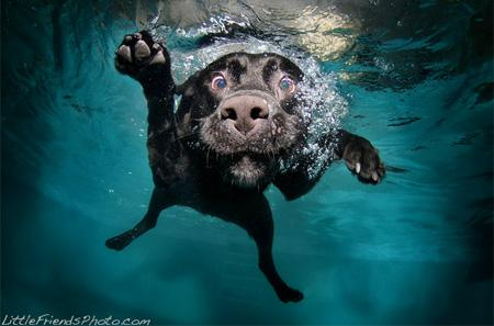 Dogs Photography