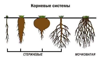 корень под знаком корня
