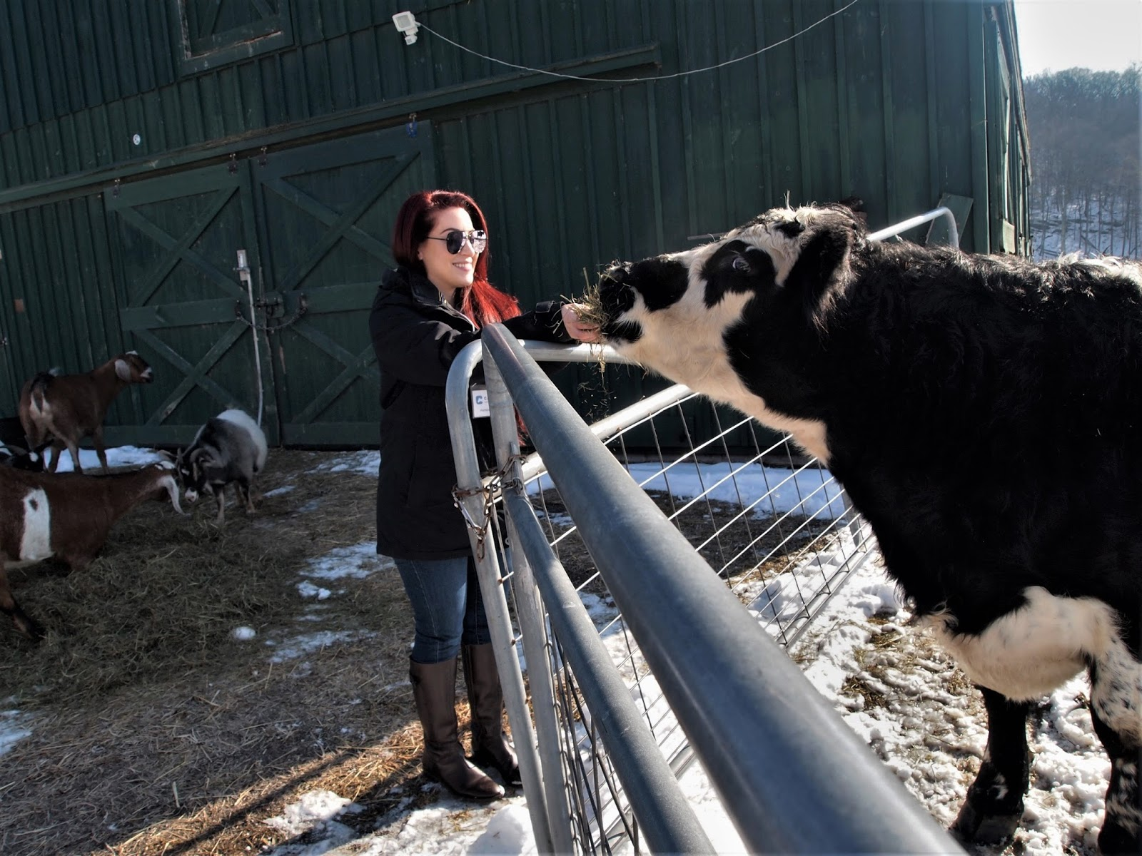 Veggie Amore: Our Weekend at the Catskill Animal Sanctuary