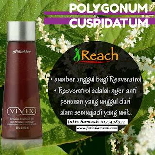 Polygonum-Cuspidatum-vivix-shaklee