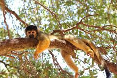 יער הקופים- יודפת