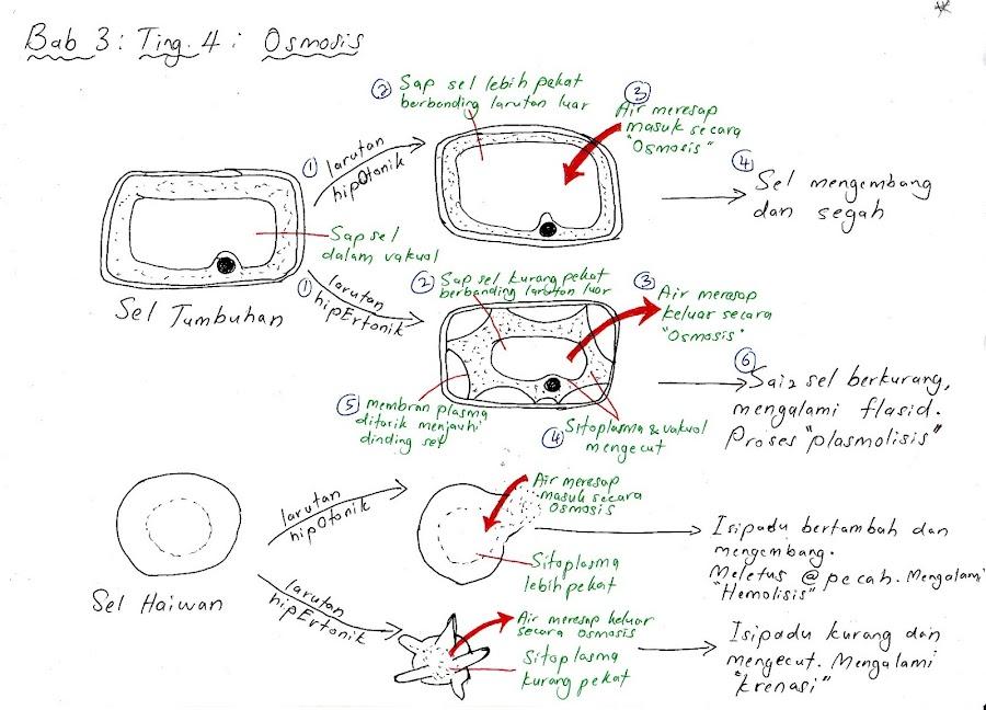 Nota Kreatif Biologi Tingkatan 4