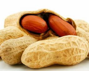 Kandungan Gizi Kacang Tanah Goreng / Rebus / Sangrai