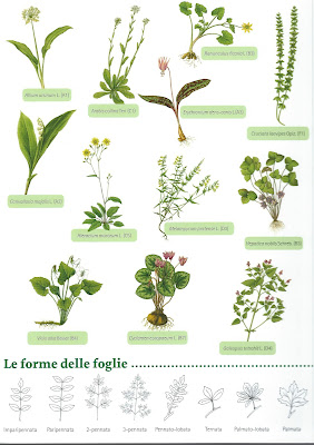 Brochure created by the Rete orti botanici lombardia, called Piante del sottobosco.
