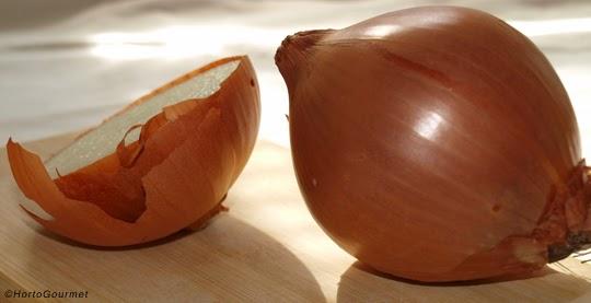 Cebollas HortoGourmet