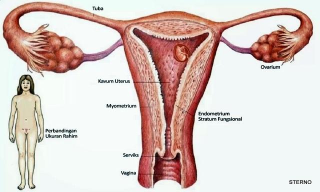 ciri khas kanker rahim adalah bau amis pada vagina