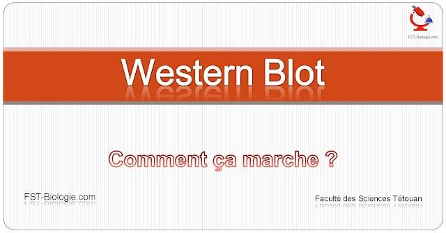 Électrophorèse - Western Blot - Comment ça marche ? SUPER VIDEO EXPLICATIVE