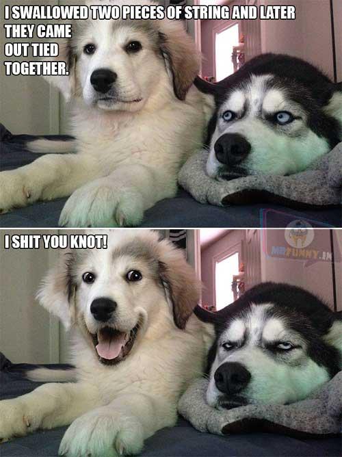 Silly Puns Dog