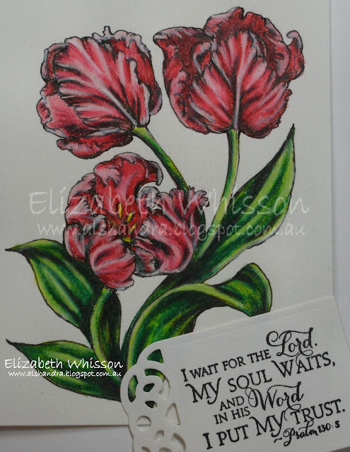 Elizabeth Whisson, Alshandra, tulips, prismacolour, pencils, PowerPoppy, Scripture Collection 9, Recipe and Tags dies, Our Daily Bread Designs, Canson Mi Tientes