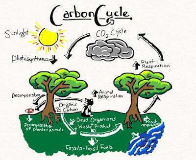 कार्बन चक्र