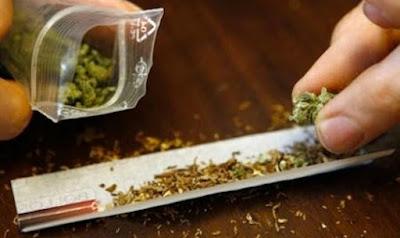 buongiornolink - Legalizzazione della cannabis, ecco gli articoli del ddl cosa cambierà con il provvedimento - La scheda