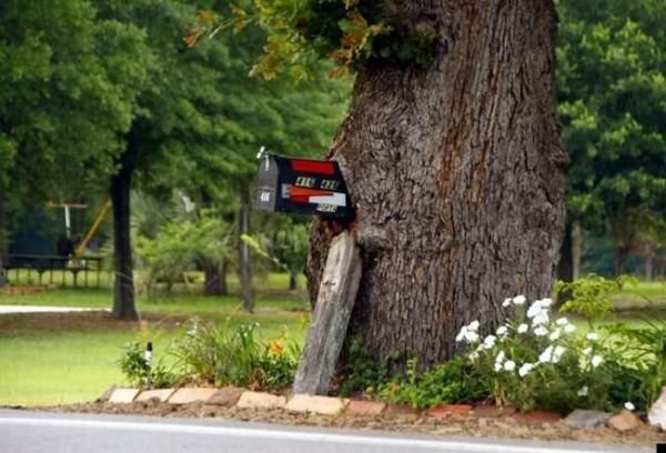 أشجار تبتلع كل ما يعترض نموها 12-600x408.jpg