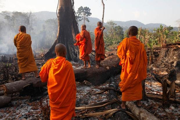 Cardamom+02+-+Monk+defending+forest+(Luke+Duggleby).jpg
