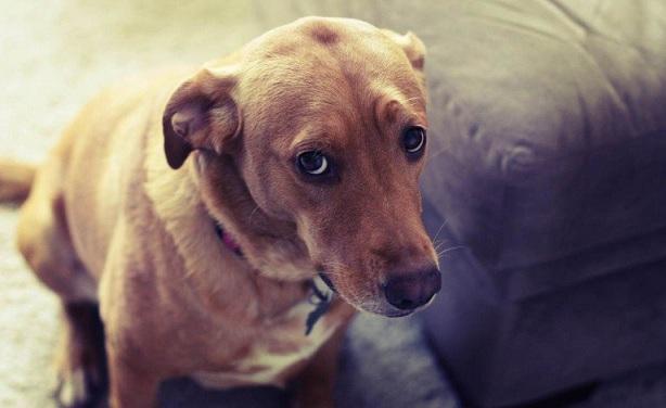 Estudio revela que cuando le hablas a tu perro el sí te entiende
