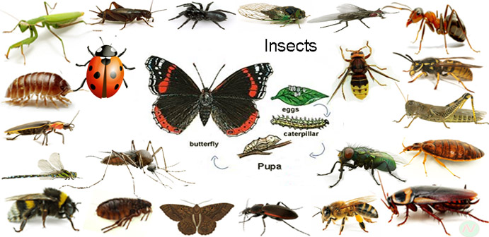 Insects Name with Relevant Necessary Vocabulary & Word ... - photo#23