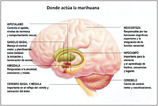 ¿Es adictivo el consumo de marihuana? - Te interesa saber