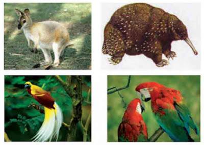 Contoh fauna australis