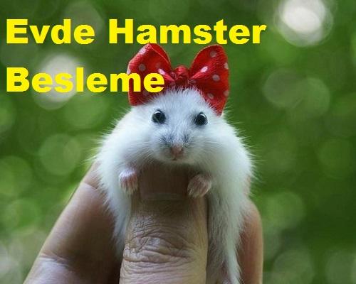 Evde Hamster Besleme