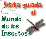 edupunto,insectos,mapa,conceptual