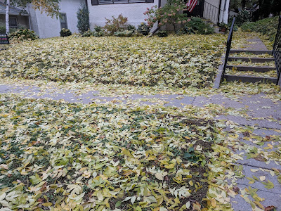 Many leaves covering a lawn and sidewalk