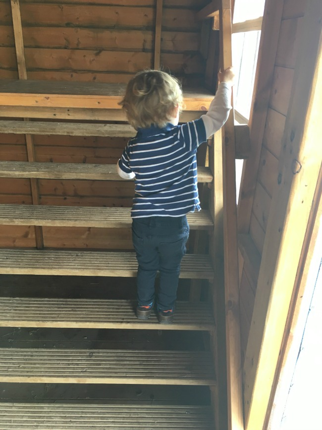 Walnut-tree-farm-park-A-Toddler-climbing-stairs