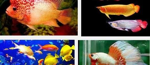 Pecinta Ikan Hias? Baca Standar Cara Perawatan Burayak Ikan Hias dalam Akuarium