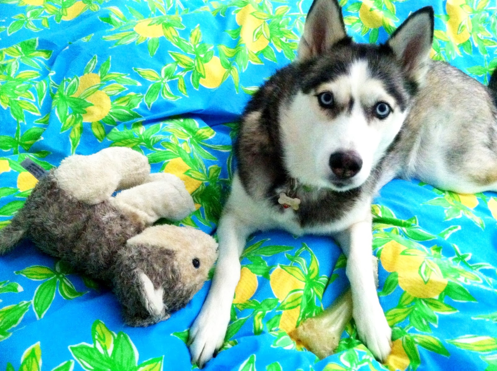 doo-dah!: Puppy Says Good Morning