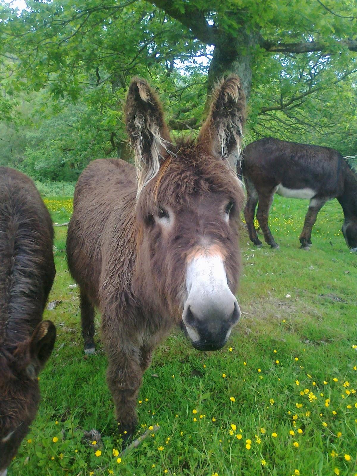 Dyfi Donkeys ADOPT A DYFI DONKEY