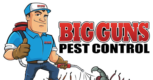 EFFECTIVE 7 TIPS FOR CHOOSING - PEST CONTROL SERVICE IN BRISBANE