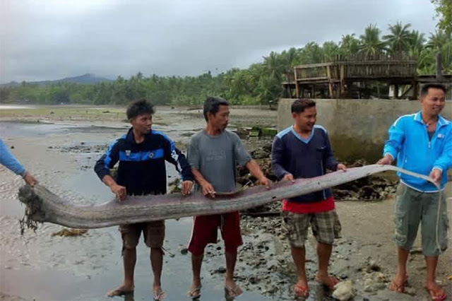 An Oarfish Was Once Again Found in Agusan Del Norte! Could This Be A Sign of an Impending Disaster?