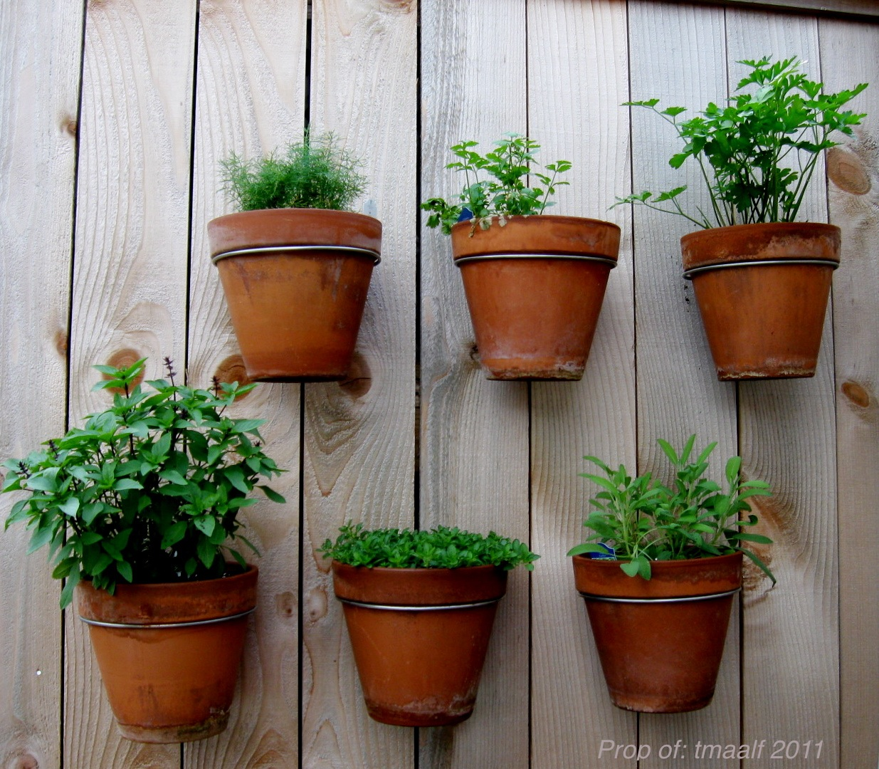 Herb Garden On Fence: Two Men And A Little Farm: CREATIVE GARDENING IN THE CITY