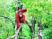 Pesona Taman Nasional Gunung Palung Kalimantan Barat