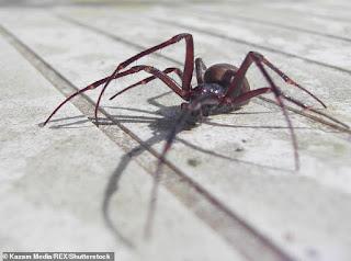 Photo of فوبيا العناكب .. كيف تواجه خوفك من تلك الحشرة الخبيثة
