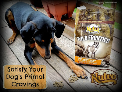 Satisfy Your Dog's Primal Cravings with Nutro Wild Frontier #LapdogCreations ©LapdogCreations